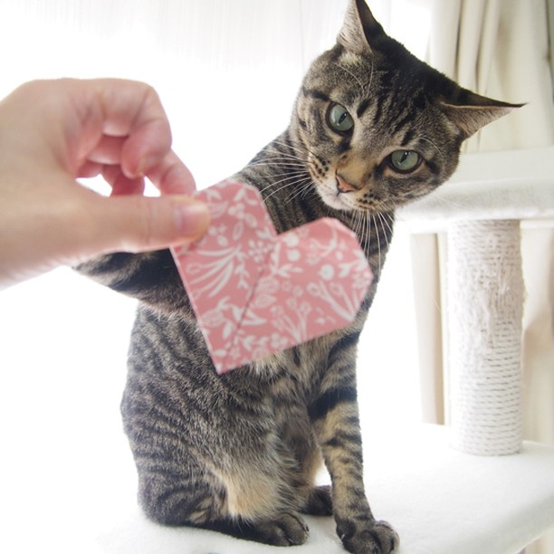 Give me that, Mom! Your love is all mine!! それちょ~だい♪ おかーしゃんのLOVEは全部ボクのものだよ#cat #neko #catsofinstagram #origami#BeOurValentinePet2016