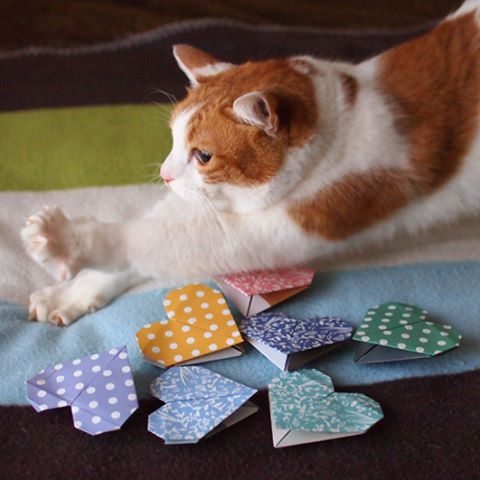 So many hearts to choose from!!!(Origami Hearts with using Catchy Origami)たくさんあって迷っちゃう〜♪#BeOurValentinePet2016 #catsofinstagram #origami