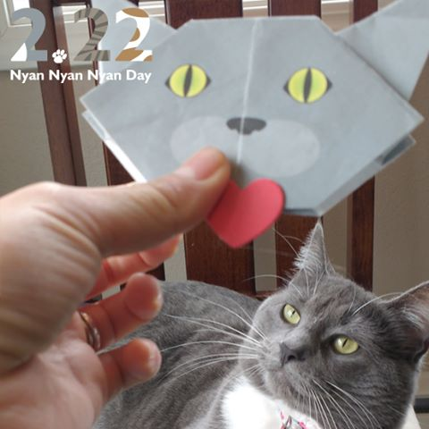 Cat Day is just around the corner! Join and Celebrate with us! Check details @Catchy_business #cat2see#catlovers#cat_features#catworldwide#tabbycat#excellent_cats#catstagram#nyanstagram#lovemeow#ig_catclub#World_kawaii_cat#instacat_meows#TopCatPhoto#igbest_cats#cutepetclub#igcutest_animals#topcatoftheday#cats_of_world