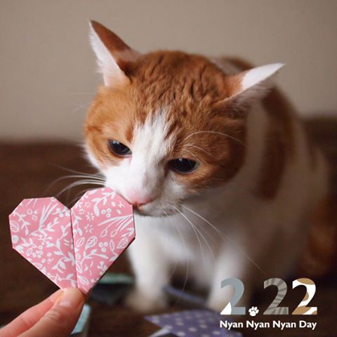 This pink one will surely do the trick!これさえあれば、イチコロね♪#cat #neko #catsofinstagram #origami #shopify