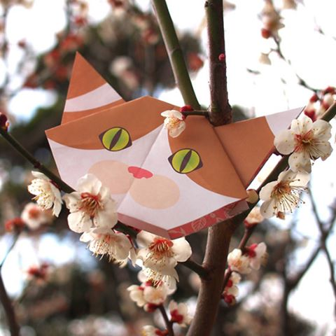 Ahhh. The sweet scent of Japanese plum trees...梅の花、いい香り〜日本では今梅が満開cat #neko #catsofinstagram #origami#cat2see#catlovers#cat_features#catworldwide#excellent_cats#catstagram#nyanstagram#lovemeow#ig_catclub#World_kawaii_cat#instacat_meows#TopCatPhoto#igbest_cats#cutepetclub#igcutest_animals#topcatoftheday#cats_of_world#excellent_kittens#kittens#kitten#lovekittens #kittycat#TheDailyKitten
