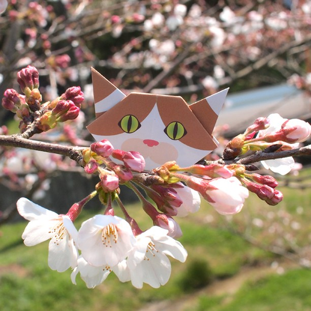 """Take me to a picnic ♡一緒にお花見連れて行って! ️Check out """"Catchy-boutique"""" in our URL.#折り紙#cat #neko #catsofinstagram #origami"""