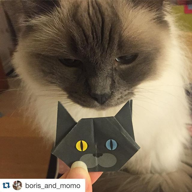 Thank you @boris_and_momo for posting lovely photo!! We are really happy..#Repost @boris_and_momo with @repostapp.・・・A new friend? #おりがみ @catchy_business