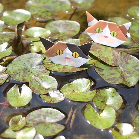 "Try taking photos in many different places with Origami cats.They are great company! Who says cats are area of water?! 水の上だって怖くない!猫折り紙、いろんな所で撮影してみてね。(おりがみ猫は、可愛いお供になるよ!) ☞Check out ""Catchy-boutique"" in our URL☞Follow: @catchyboutique☞tag: #catchy222 to share your photo with catchy goods#catsofinstagram #origami #catorigami#catchyboutique #origamicat #shopify"