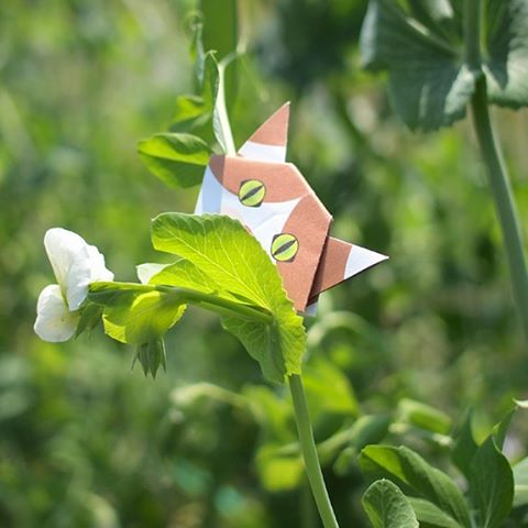 "Can you tell what flower this is? この花、何の花かわかりますか? ↓I'm right here on bean's sprouts! 豆の花です!蝶々みたいでしょう♪ ️Check out ""Catchy-boutique"" in our URL.#折り紙 #cat #neko #ねこ #ネコ"