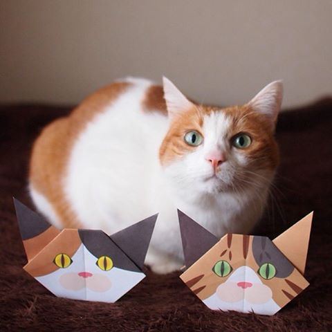 "I want to be a Calico Cat, too!:私も三毛猫になりたい!:☞Check out ""Catchy-boutique"" in our URL☞Follow: @catchyboutique☞tag: #catchy222 to share your photo with catchy goods:#origami #折り紙 #cat #neko #ねこ #ネコ"