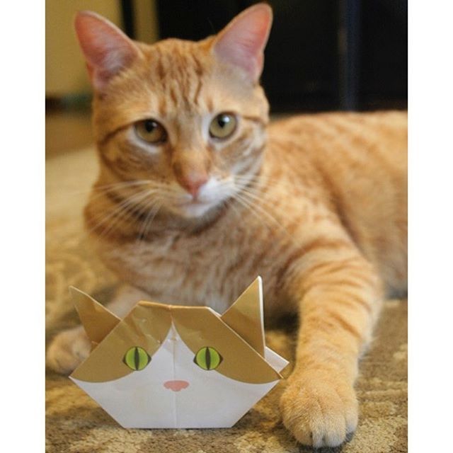 """From SeattleAdorable picture of Ginger cat with Catchy Origami Cat from Seattle, WA (USA).We are so happy to hear that both humans and the cat enjoyed our Catchy Cat Origami together.Which one is your favorite Catchy Cat Origami. We hope you can find the best match kitty for you!:シアトルより♪茶トラ猫ちゃんと折り紙のお写真が届きました。Catchy折り紙を楽しんでいただき嬉しいです♪あなたもCat Origamiで、好みの猫ちゃんを見つけてね:☞Check out """"Catchy-boutique"""" in our URL☞Follow: @catchyboutique☞tag: #catchy222 toshare your photo with catchy goods:#origami #折り紙 #cat #neko #ねこ #ネコ"""