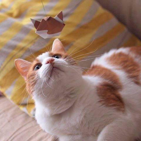 "A flying cat?!Attach a string to make a Catchy Cat Origami cat toy!! 猫が飛んでる!?猫折り紙に糸をつけると、猫のおもちゃにも変身!:☞Check out ""Catchy-boutique"" in our URL☞Follow: @catchyboutique☞tag: #catchy222 to share your photo with catchy goods:#origami #折り紙 #cat #neko #ねこ #ネコ"