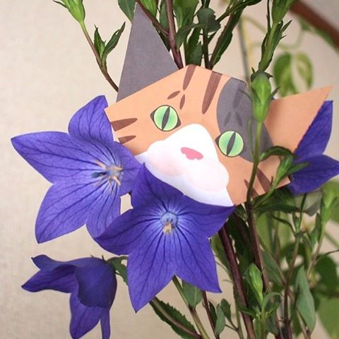 "Japanese Summer flower, Japanese Bellflower and Mini cat origami.日本の夏の花「桔梗(ききょう)」と記念撮影♪Japanese bellflowers have been loved by people for centuries.Many traditional Japanese family crests have Japanese bellflowers as part of design.桔梗の花は日本古来から和歌でも詠まれ、愛されてきた花です。日本では昔からこの「桔梗」をモチーフにした家紋などのマークも多く見かけます。:☞Check out ""Catchy-boutique"" in our URL☞Follow: @catchyboutique☞tag: #catchy222 to share your photo with catchy goods:#origami #折り紙 #cat #neko #ねこ #ネコ"