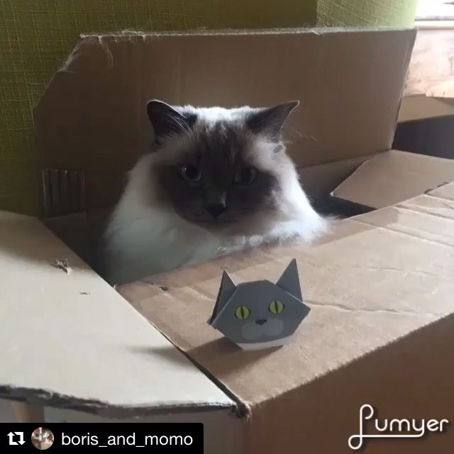 We want to share a lovely video of Boris and Momo! Look how they play so well together! Thank you for sharing, Boris and Momo!:#Repost@boris_and_momo with @repostapp・・・We love Catchy origami!  #catchy222 #猫 #momothecat @catchyboutique