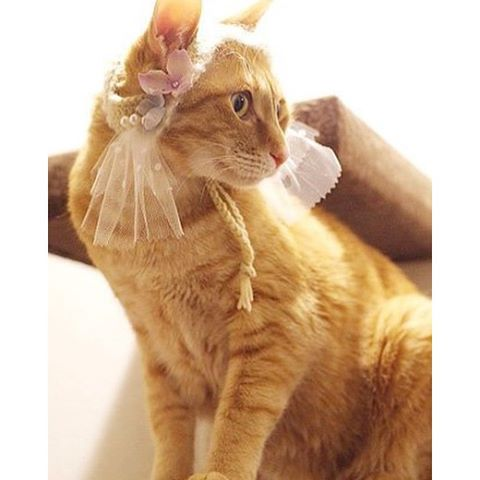 """I feel so pretty!(CatHeaddressfromJapan):☞Check out """"Catchy-boutique"""" in our URL☞Follow: @catchyboutique☞tag: #catchy222 toshare your photo with catchy goods:#cat #neko #ねこ #ネコ #headdress #headaccessories #headpiece #cathat #catcostume"""