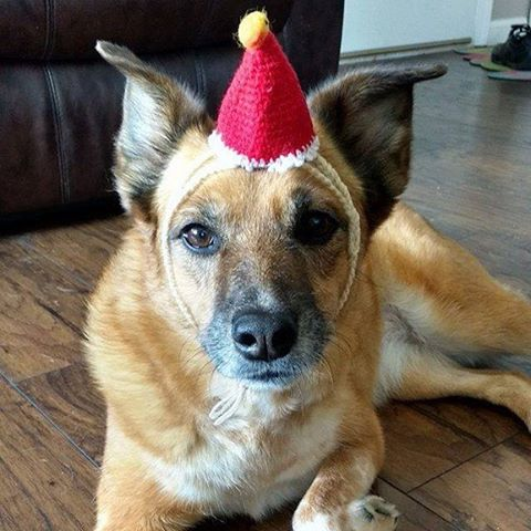 """Ready for the party!パーティーの準備はばっちり!(JapaneseCatGnomeHat):Dogs can enjoy it, too!:☞Check out """"Catchy-boutique"""" in our URL☞Follow: @catchyboutique☞tag: #catchy222 toshare your photo with catchy goods:#cat #neko #ねこ #ネコ #headdress #headaccessories #headpiece #cathat #catcostume #dog #dogs"""