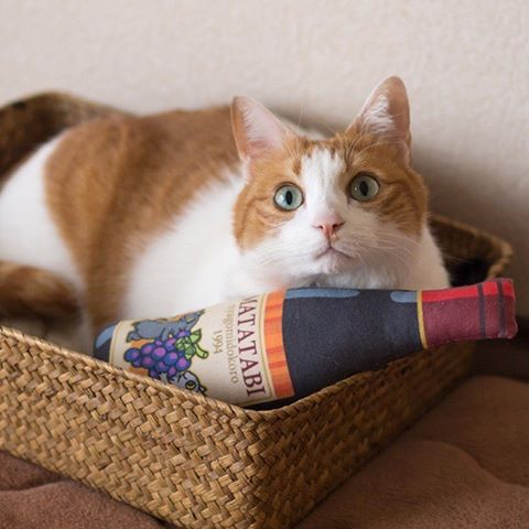 """Who would like to try Silvervine wine?マタタビワイン、いかがですか〜?:Catchy Boutique introduces a handmade cat toy with natural Japanese silvervine from Nyagomidokoro.Silvervine powder, a natural alternative to catnip can make your cat """"drunk.""""You cat might show behavioral reactions include rolling, chin and cheek rubbing, meowing, drooling and licking.Silver vine is very popular and commonly used for cat toys in Japan.:☞Check out """"Catchy-boutique"""" in our URL☞Follow: @catchyboutique☞tag: #catchy222 toshare your photo with catchy goods:#cat #neko #ねこ #ネコ#silvervine #cattoy #cattoys #またたび"""